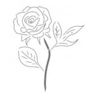 rosa_plata